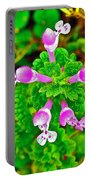 Henbit At Chickasaw Village Site At Mile 262 Of Natchez Trace Parkway-mississippi Portable Battery Charger