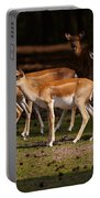 Herd Of Blackbuck Antilopes In A Dark Forest Portable Battery Charger