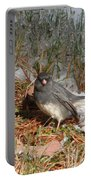 Dark-eyed Junco Portable Battery Charger