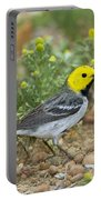 Hermit Warbler Portable Battery Charger