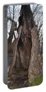 Hollow Tree At Mather Mill Portable Battery Charger