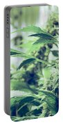 Home Grown Cannabis Plants. Portable Battery Charger