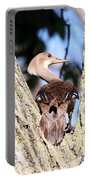 Hooded Merganser Duck Portable Battery Charger