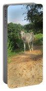 Horse Walks Toward Camera Portable Battery Charger