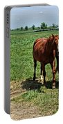 Horses In The Pasture Portable Battery Charger