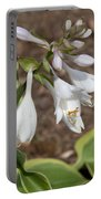 Hosta Portable Battery Charger