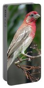 House Finch At Rest Portable Battery Charger