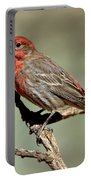 House Finch Carpodacus Mexicanus Portable Battery Charger