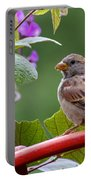 House Sparrow On A Wheel Portable Battery Charger