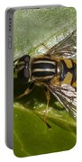 Hoverfly Portable Battery Charger