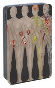 Human Systems In The Female Anatomy Portable Battery Charger