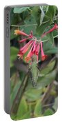 Humming Bird At Honey Suckle Vine Portable Battery Charger