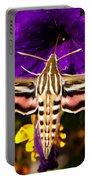 Hummingbird Moth   #8645 Portable Battery Charger
