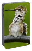 Hummingbird Stretching  Portable Battery Charger