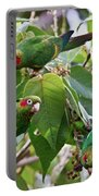 Hungry Chiriqui Conures Portable Battery Charger