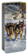 Husky Sled Dogs, Lapland, Sweden Portable Battery Charger