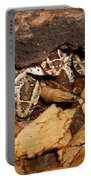Identity Crisis Baby Puff Adders Bitis Arietans  Portable Battery Charger