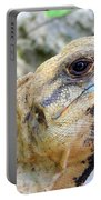 Iguana Of The Uxmal Pyramids In Yucatan Mexico Portable Battery Charger