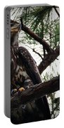 Immature American Bald Eagle Portable Battery Charger
