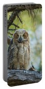 Immature Great Horned Owl Portable Battery Charger