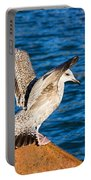 Immature Herring Gull At The Harbour Portable Battery Charger
