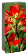 Indian Paintbrush I I Portable Battery Charger