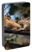 Indian Palm Squirrel Portable Battery Charger