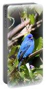 Indigo Bunting - Img 431-007 Portable Battery Charger