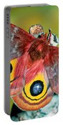 Io Moth Portable Battery Charger