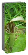 Jack In The Pulpit - Arisaema Triphyllum Portable Battery Charger