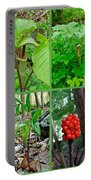 Jack-in-the-pulpit Wildflower    Arisaema Triphyllum Portable Battery Charger