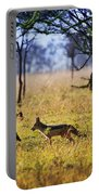 Jackals On Savanna. Safari In Serengeti. Tanzania. Africa Portable Battery Charger