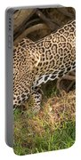 Jaguar Panthera Onca Foraging Portable Battery Charger