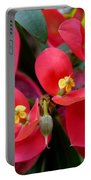 Jamaican Poinsettia Portable Battery Charger
