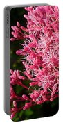 Joe Pye Weed Portable Battery Charger