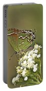 Juniper Or Olive Hairstreak Butterfly - Callophrys Gryneus Portable Battery Charger
