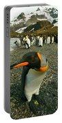 Juvenile King Penguin Portable Battery Charger