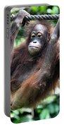 Juvenile Orangutan Borneo Portable Battery Charger