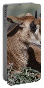 Juvenile Sable Antelope Portable Battery Charger