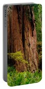 Kevin And The Big Tree - Redwood National Forest Portable Battery Charger