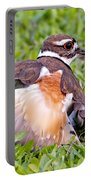 Killdeer 2 Sleight Of Wing Portable Battery Charger
