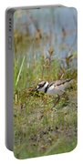 Killdeer Hatchling Portable Battery Charger