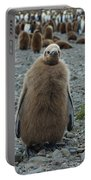 King Penguin Chick Portable Battery Charger