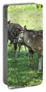 Kudu Antelope In A Straight Line Portable Battery Charger