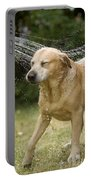 Labrador Playing In Water Portable Battery Charger
