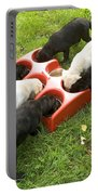 Labrador Puppies Eating Portable Battery Charger