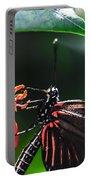 Laparus Doris Butterfly Portable Battery Charger
