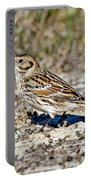 Lapland Longspur Portable Battery Charger
