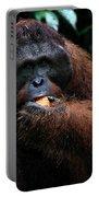 Large Male Orangutan Borneo Portable Battery Charger