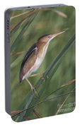 Least Bittern Portable Battery Charger